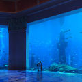 Ambassador Lagoon Atlantis The Palm